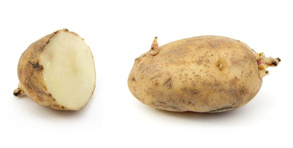 1920px-russet_potato_cultivar_with_sprouts
